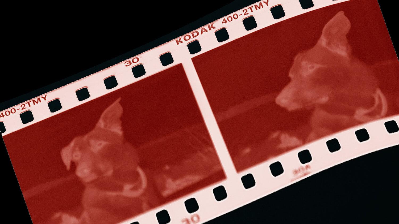 Traco Media - Analogfotografie Filmentwicklung und Digitalisierung von Negativen